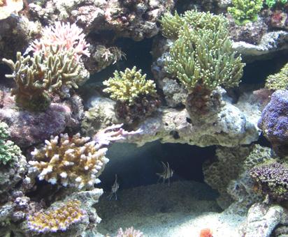 Plafoniere Acquario Acqua Dolce : L acquario marino tropicale